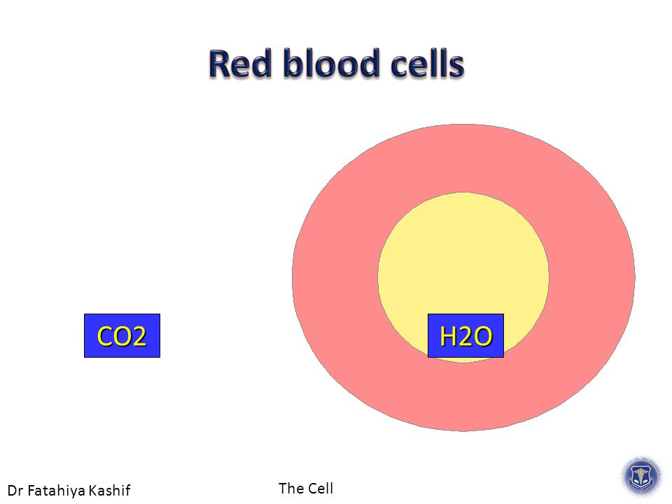 Dr Fatahiya Kashif The Cell H2OCO2
