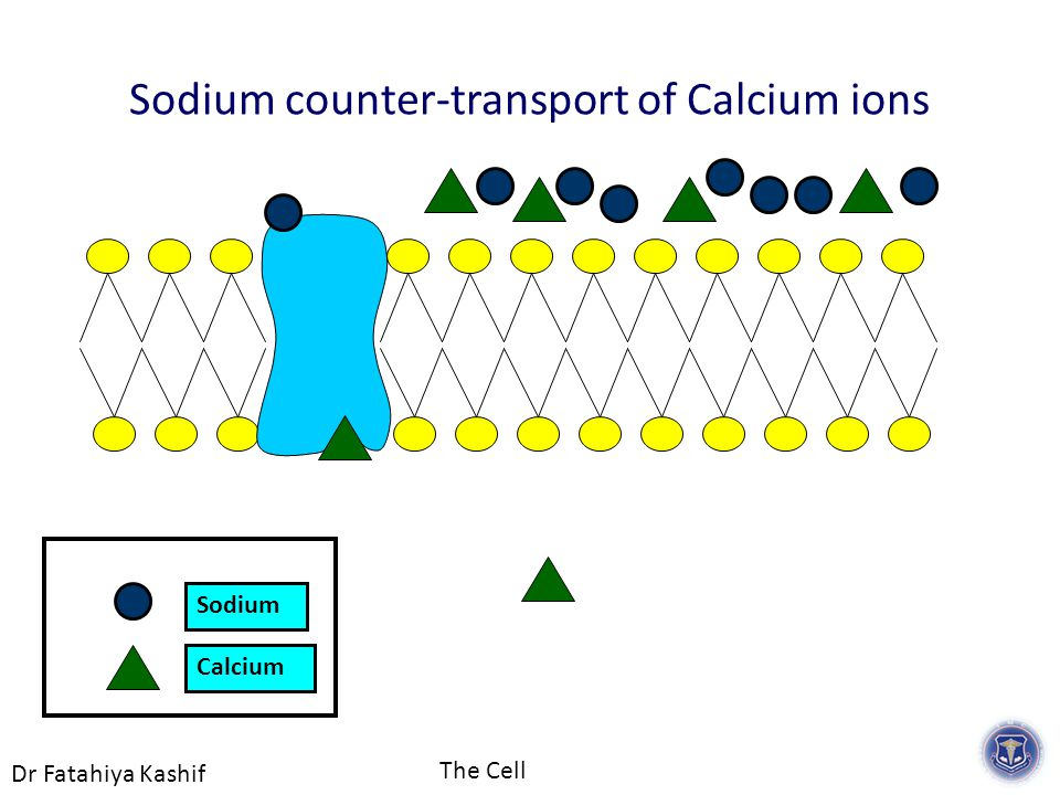 Dr Fatahiya Kashif The Cell Calcium Sodium Sodium counter-transport of Calcium ions