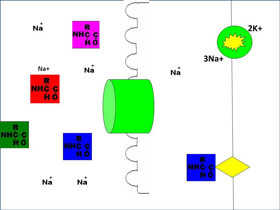 Dr Fatahiya Kashif The Cell Na+ 3Na+ 2K+