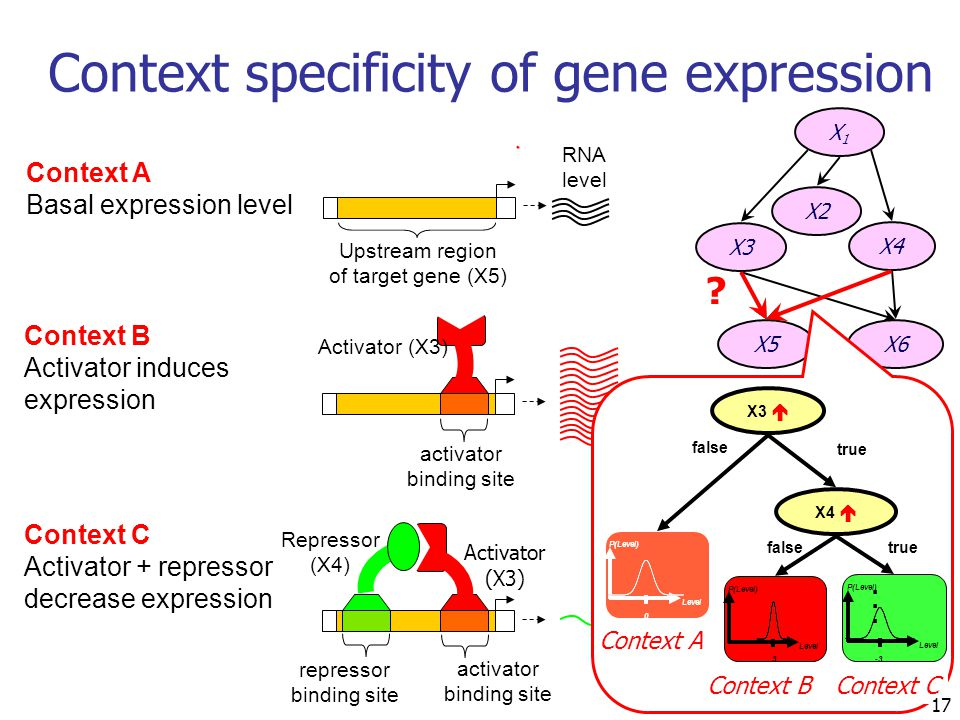 17 Context specificity of gene expression Context A Basal expression level Upstream region of target gene (X5) RNA level Activator (X3) activator bind