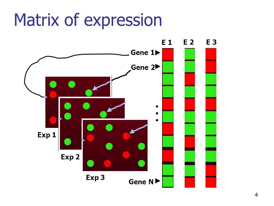 4 Gene 1 Gene 2 Gene N Exp 1 E 1 Exp 2 E 2 Exp 3 E 3 Matrix of expression