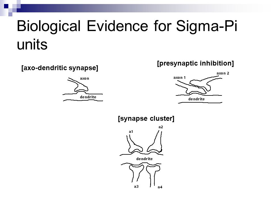 Biological Evidence for Sigma-Pi units [axo-dendritic synapse] [presynaptic inhibition] [synapse cluster]