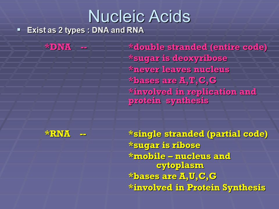 Nucleic Acids  Exist as 2 types : DNA and RNA *DNA -- *double stranded (entire code) *sugar is deoxyribose *never leaves nucleus *bases are A,T,C,G *