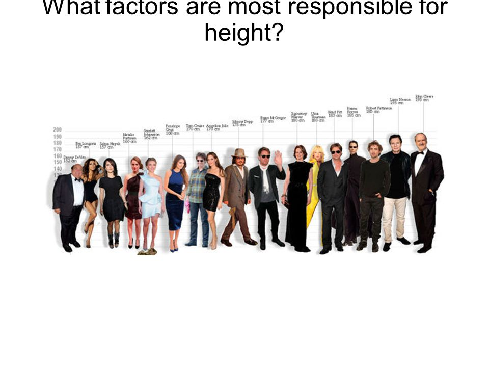 What factors are most responsible for height