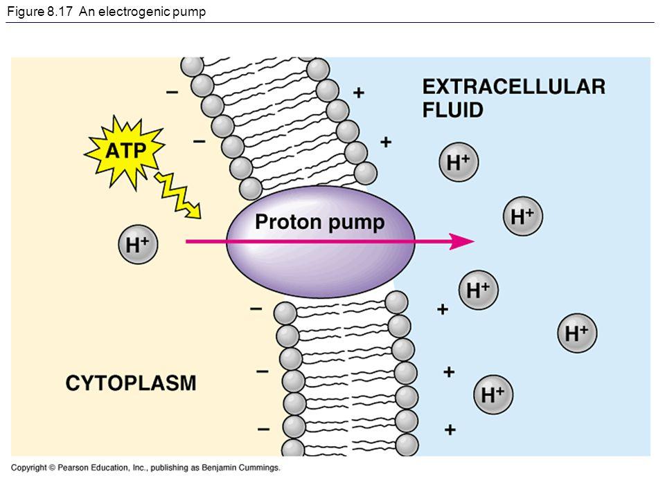Figure 8.17 An electrogenic pump