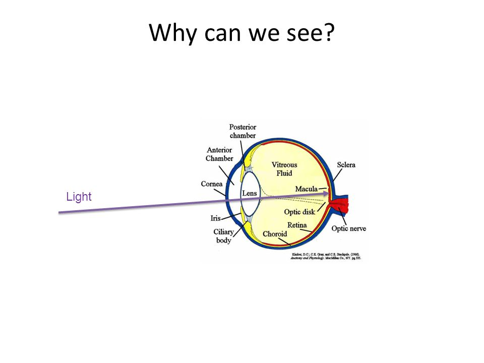 Why can we see? Light