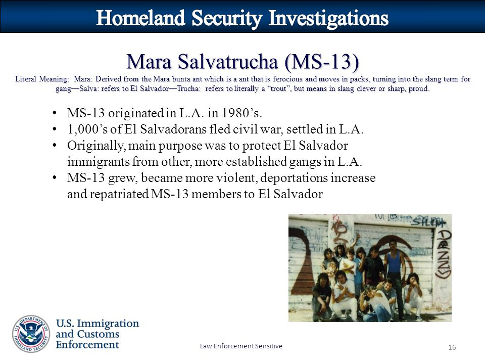 Law Enforcement Sensitive 16 Mara Salvatrucha (MS-13) Literal Meaning: Mara: Derived from the Mara bunta ant which is a ant that is ferocious and moves in packs, turning into the slang term for gang—Salva: refers to El Salvador—Trucha: refers to literally a trout , but means in slang clever or sharp, proud.