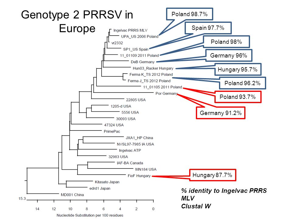 Genotype 2 PRRSV in Europe Poland 98.7% Poland 98% Spain 97.7% Hungary 95.7% Poland 93.7% Hungary 87.7% % identity to Ingelvac PRRS MLV Clustal W Germany 96% Poland 96.2% Germany 91.2%