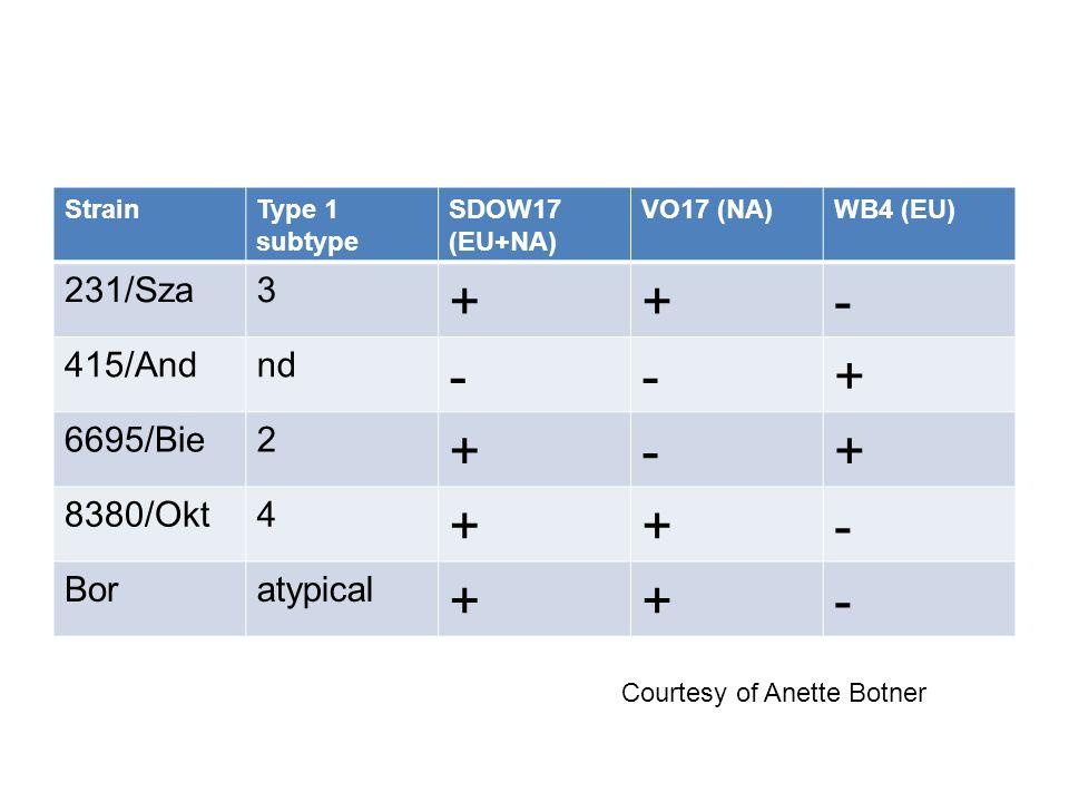 StrainType 1 subtype SDOW17 (EU+NA) VO17 (NA)WB4 (EU) 231/Sza3 ++- 415/Andnd --+ 6695/Bie2 +-+ 8380/Okt4 ++- Boratypical ++- Courtesy of Anette Botner
