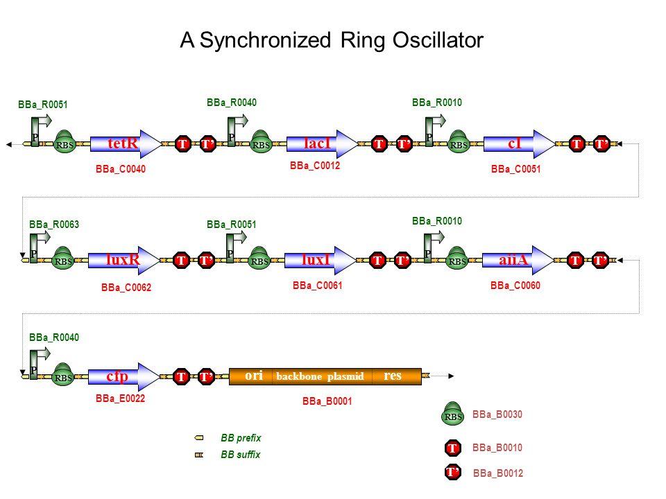 A Synchronized Ring Oscillator