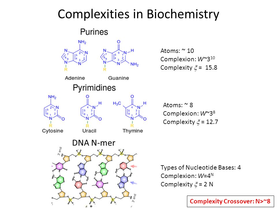 Complexities in Biochemistry Atoms: ~ 10 Complexion: W~3 10 Complexity  = 15.8 Atoms: ~ 8 Complexion: W~3 8 Complexity  = 12.7 DNA N-mer Types of Nucleotide Bases: 4 Complexion: W=4 N Complexity  = 2 N Complexity Crossover: N>~8