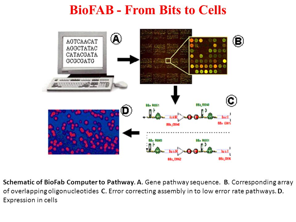 BioFAB - From Bits to Cells Schematic of BioFab Computer to Pathway.