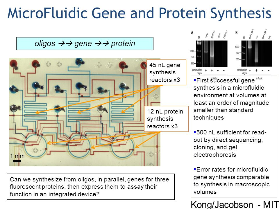 1 mm MicroFluidic Gene and Protein Synthesis oligos  gene  protein 45 nL gene synthesis reactors x3 12 nL protein synthesis reactors x3 Can we synthesize from oligos, in parallel, genes for three fluorescent proteins, then express them to assay their function in an integrated device.
