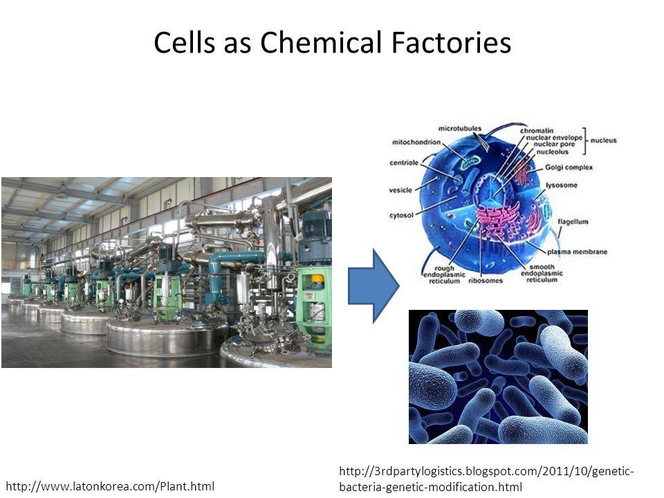 Cells as Chemical Factories http://3rdpartylogistics.blogspot.com/2011/10/genetic- bacteria-genetic-modification.html http://www.latonkorea.com/Plant.html