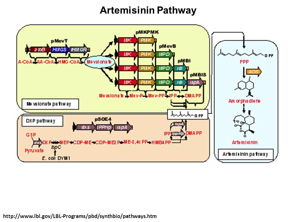 Artemisinin Pathway http://www.lbl.gov/LBL-Programs/pbd/synthbio/pathways.htm