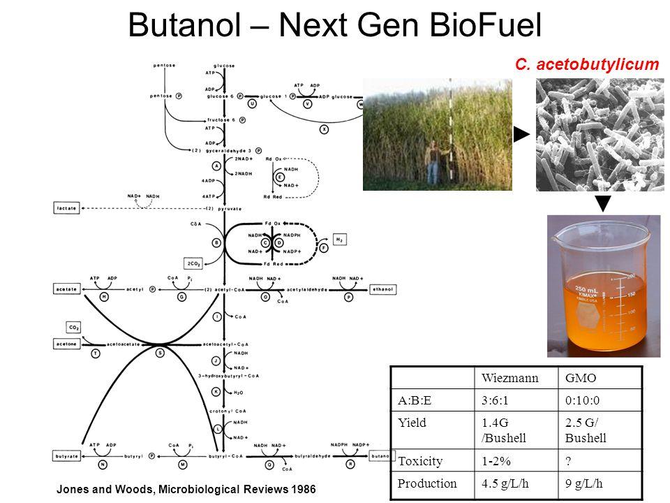 Jones and Woods, Microbiological Reviews 1986 Butanol – Next Gen BioFuel WiezmannGMO A:B:E3:6:10:10:0 Yield1.4G /Bushell 2.5 G/ Bushell Toxicity1-2%.