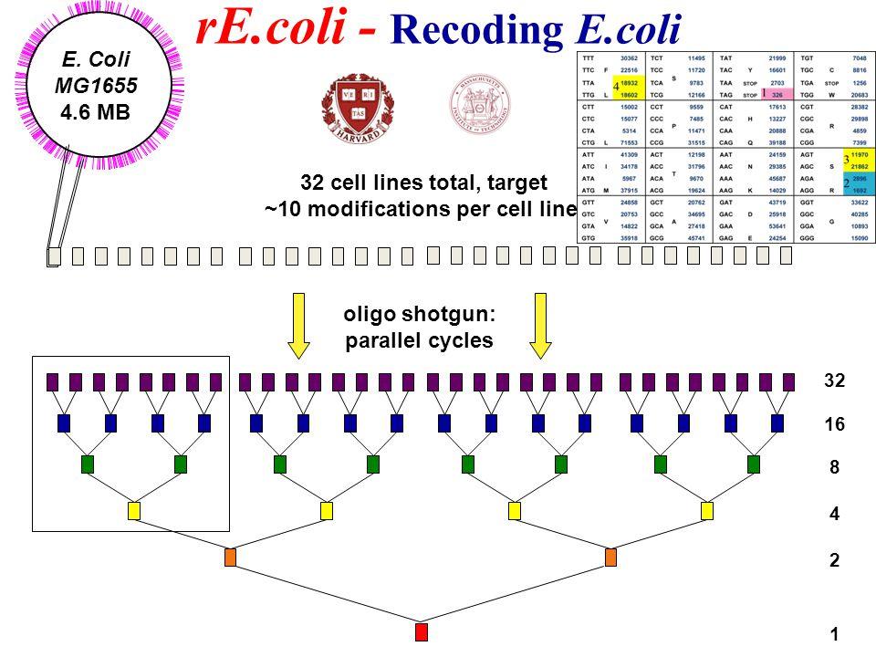32 cell lines total, target ~10 modifications per cell line E. Coli MG1655 4.6 MB rE.coli - Recoding E.coli oligo shotgun: parallel cycles 32 16 8 4 2