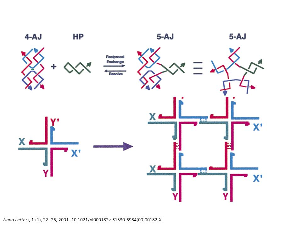 Nano Letters, 1 (1), 22 -26, 2001. 10.1021/nl000182v S1530-6984(00)00182-X Holliday Junctions