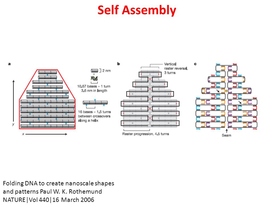 Self Assembly Folding DNA to create nanoscale shapes and patterns Paul W.