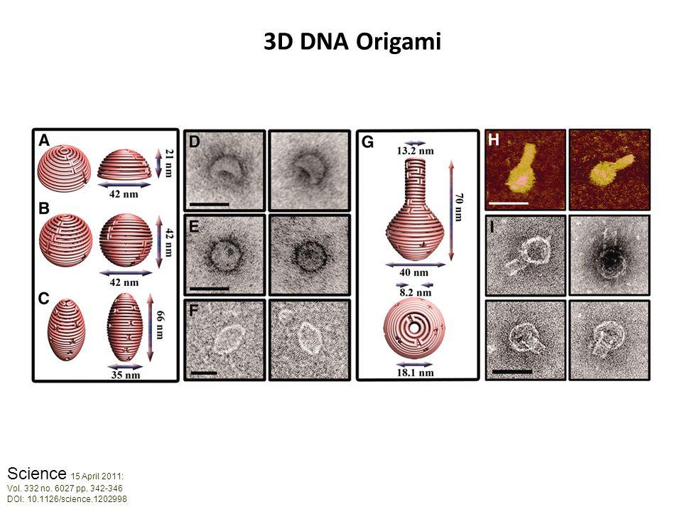 Science 15 April 2011: Vol. 332 no. 6027 pp. 342-346 DOI: 10.1126/science.1202998 3D DNA Origami