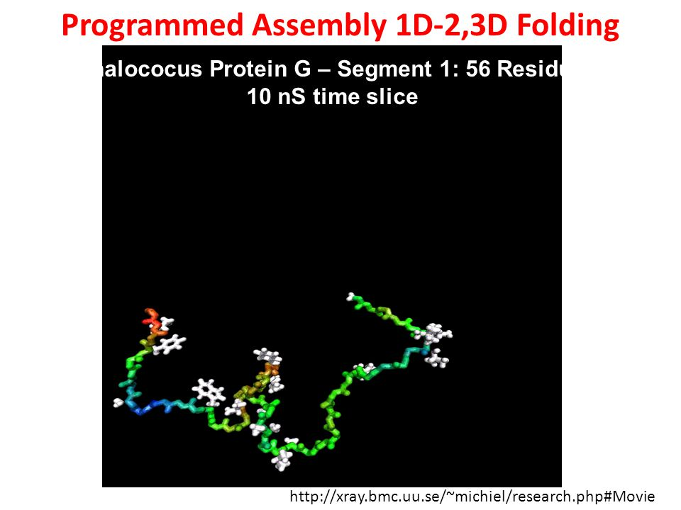 http://xray.bmc.uu.se/~michiel/research.php#Movie Staphalococus Protein G – Segment 1: 56 Residues – 10 nS time slice Programmed Assembly 1D-2,3D Folding