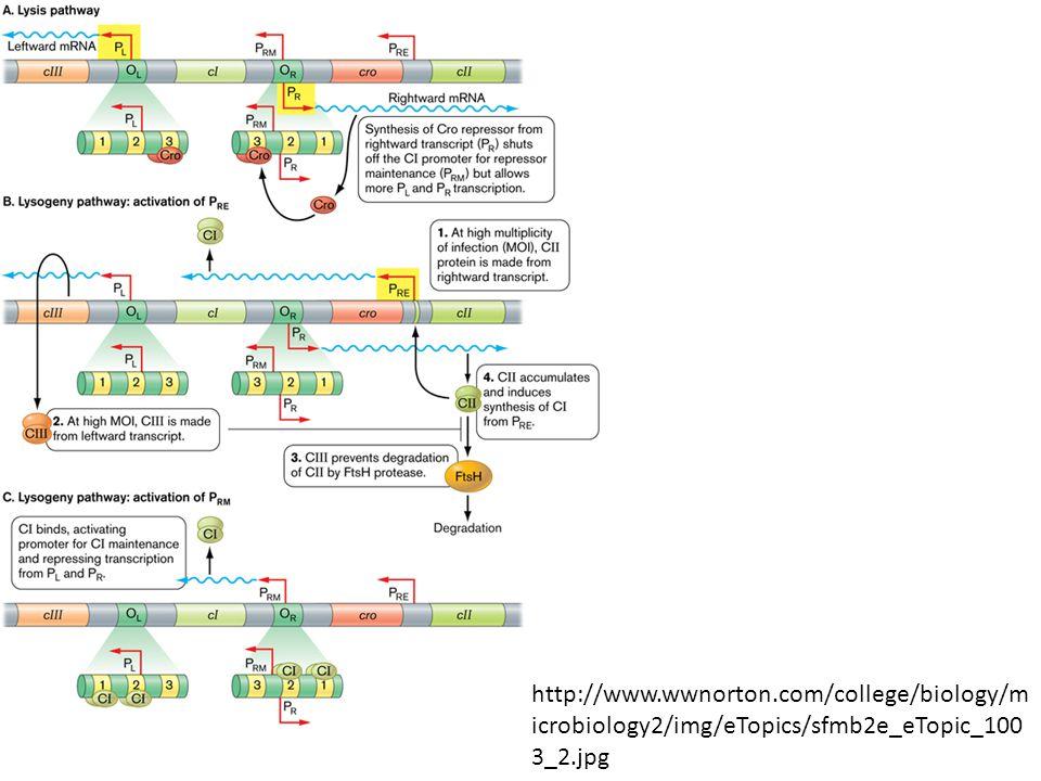 http://www.wwnorton.com/college/biology/m icrobiology2/img/eTopics/sfmb2e_eTopic_100 3_2.jpg