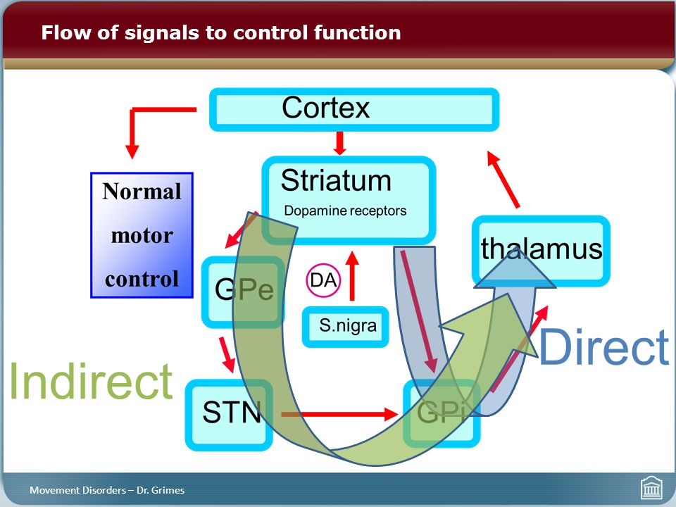 Flow of signals to control function Movement Disorders – Dr. Grimes Direct Indirect