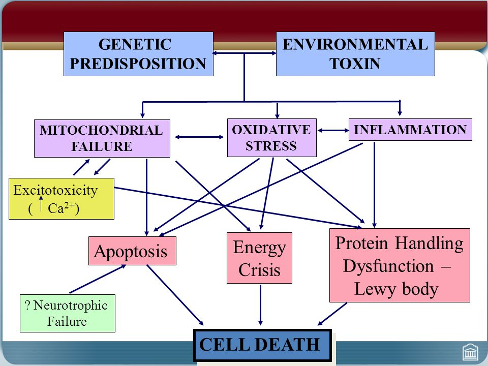 GENETIC PREDISPOSITION ENVIRONMENTAL TOXIN MITOCHONDRIAL FAILURE OXIDATIVE STRESS Excitotoxicity ( Ca 2+ ) Apoptosis Energy Crisis Protein Handling Dy