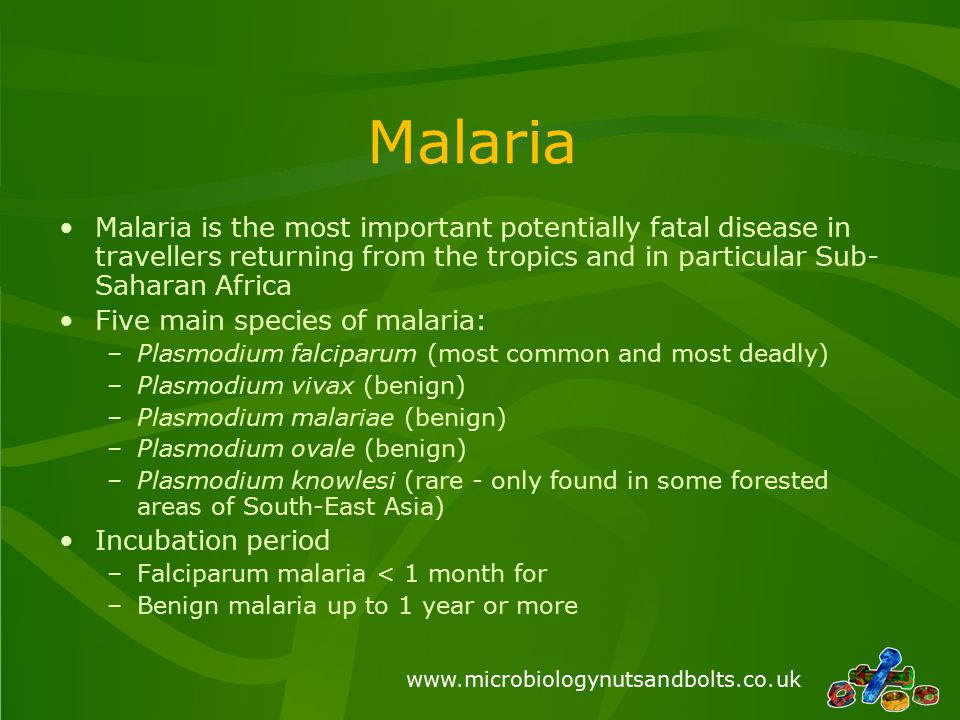 www.microbiologynutsandbolts.co.uk Malaria Malaria is the most important potentially fatal disease in travellers returning from the tropics and in par