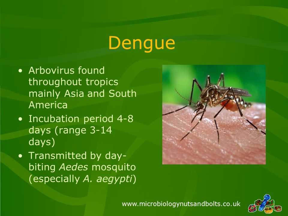 www.microbiologynutsandbolts.co.uk Dengue Arbovirus found throughout tropics mainly Asia and South America Incubation period 4-8 days (range 3-14 days) Transmitted by day- biting Aedes mosquito (especially A.