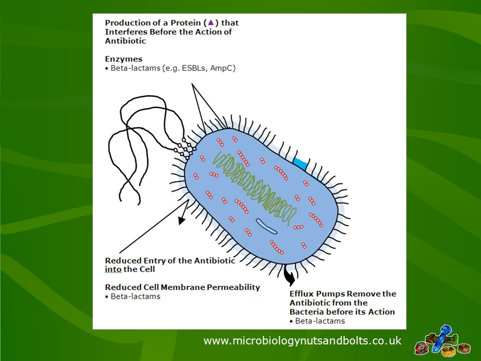 www.microbiologynutsandbolts.co.uk