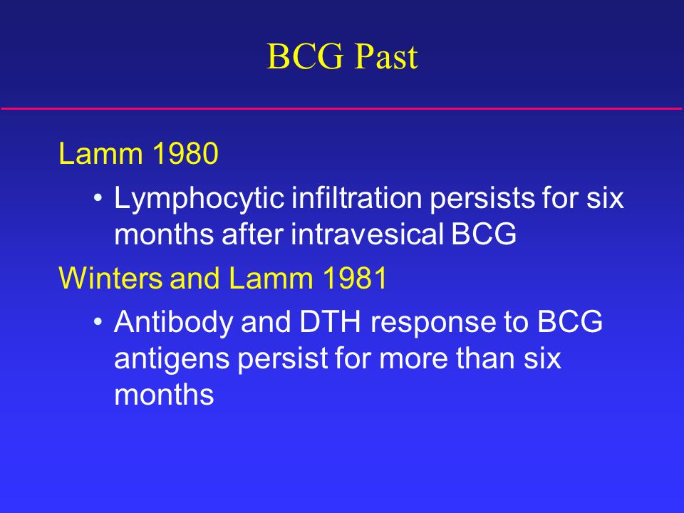 BCG Past Lamm 1980 Lymphocytic infiltration persists for six months after intravesical BCG Winters and Lamm 1981 Antibody and DTH response to BCG antigens persist for more than six months