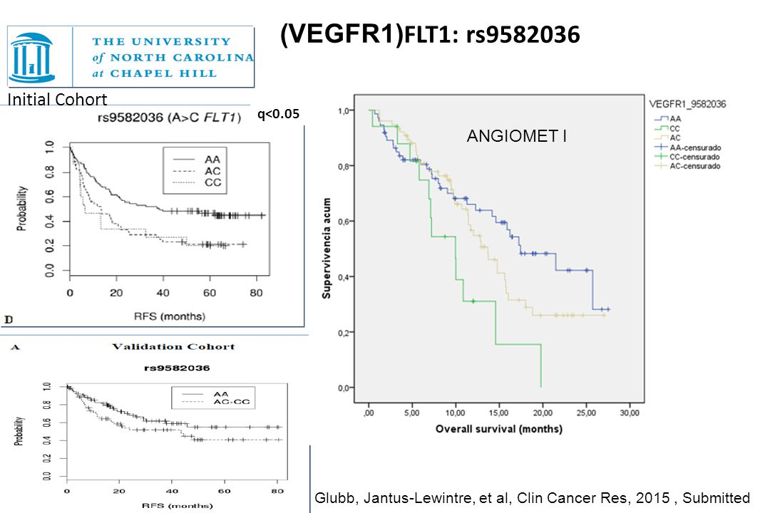 Initial Cohort q<0.05 (VEGFR1) FLT1: rs9582036 Glubb, Jantus-Lewintre, et al, Clin Cancer Res, 2015, Submitted ANGIOMET I
