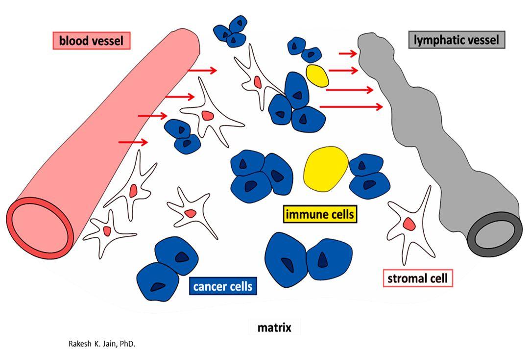 Activation EGFR increases VEGF Inhibition EGFR decreases VEGF Resistence to inhibition EGFR is associated with enhanced VEGF leves(HGF/Met) Activation EGFR increases VEGF Inhibition EGFR decreases VEGF Resistence to inhibition EGFR is associated with enhanced VEGF leves(HGF/Met)