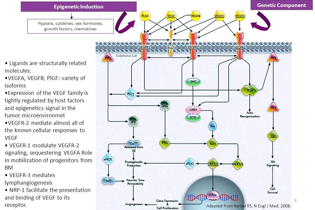LUME-Lung 1: Adverse Events of Special Interest Reck M, et al.