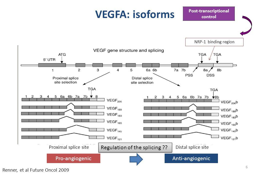 6 66 Proximal splice siteDistal splice site Renner, et al Future Oncol 2009 VEGFA: isoforms NRP-1 binding region Post-transcriptional control Pro-angiogenicAnti-angiogenic Regulation of the splicing