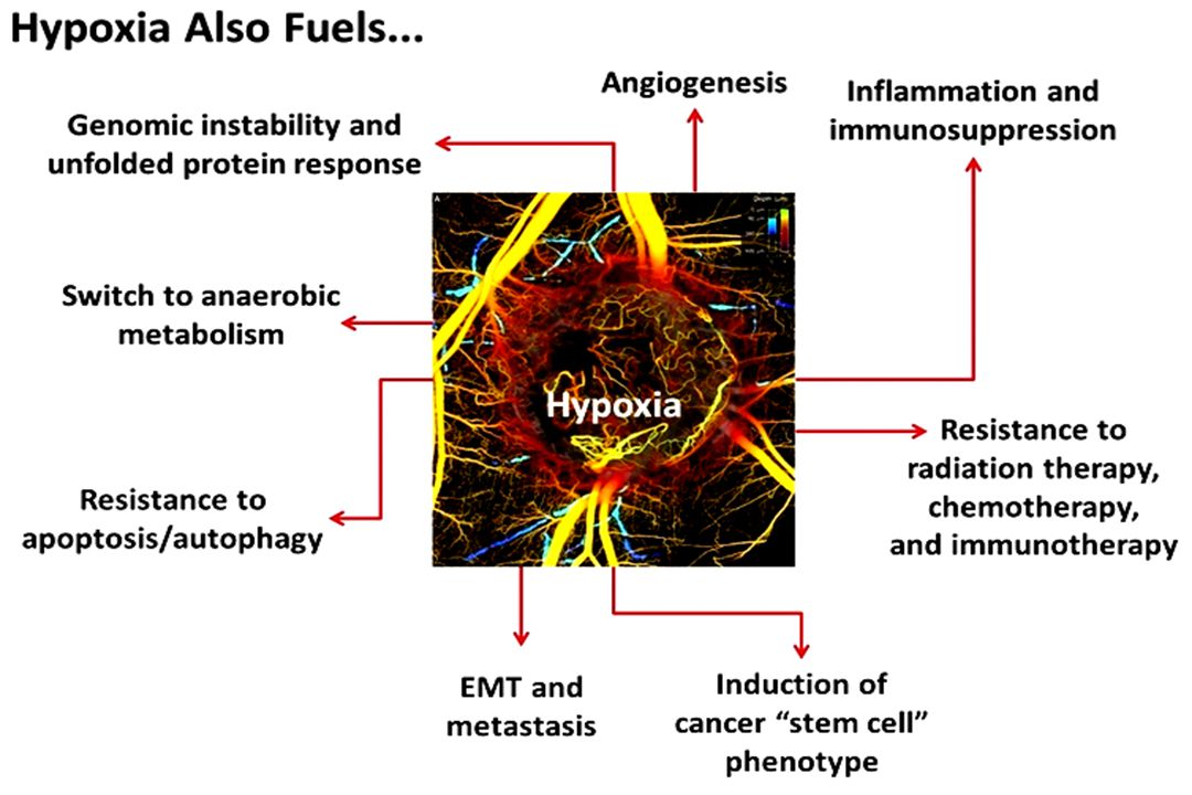 Numerous anti-angiogenic agents have failed to show a survival benefit in advanced NSCLC StudyInterventionTargetPFS, monthsOS, months Primary endpoint ESCAPE 1 (n=926) CB/PTX/placebo CB/PTX/sorafenib VEGFR-2, -3, PDGFR-ß, Flt-3, b-RAF, c-kit 5.4 4.6 HR: 0.99 (0.84–1.16) 10.6 10.7 HR: 1.15 (0.94–1.41) OS NExUS 2 (n=772) CIS/GEM/placebo CIS/GEM/sorafenib 5.5 6.0 HR: 0.83 (0.71–0.97) 12.5 12.4 HR: 0.98 (0.83–1.16) OS ZEAL 3 (n=534) Pemetrexed/placebo Pemetrexed/vandetanib VEGFR-1,-2, -3, EGFR, RET 2.8 4.1 HR: 0.86 (0.69–1.06) 9.2 10.5 HR: 0.86 (0.65–1.13) PFS ZODIAC 4 (n=1391) Docetaxel/placebo Docetaxel/vandetanib 3.2 4.0 HR: 0.79 (0.70–0.90) 10.0 10.6 HR: 0.91 (0.78–1.07) PFS SUN1087 5 (n=960)* Erlotinib/placebo Erlotinib/sunitinib VEGFR-1, -2, -3, PDGFR-ɑ, -ß, Flt- 3, c-kit 2.0 3.6 HR: 0.81 (0.70–0.94) 8.5 9.0 HR: 0.92 (0.80–1.07) OS VITAL 6 (n=913) Docetaxel/placebo Docetaxel/afliberceptVEGF-A, -B, PIGF 4.1 5.2 HR: 0.82 (0.72–0.94) 10.4 10.1 HR: 1.01 (0.87–1.17) OS BETA 7 (n=636) Erlotinib/placebo Erlotinib/bevacizumabVEGF-A 1.7 3.4 HR: 0.62 (0.52–0.75) 9.2 9.3 HR: 0.97 (0.80–1.18) OS First line Second line *280 patients received >1 prior treatment lines.