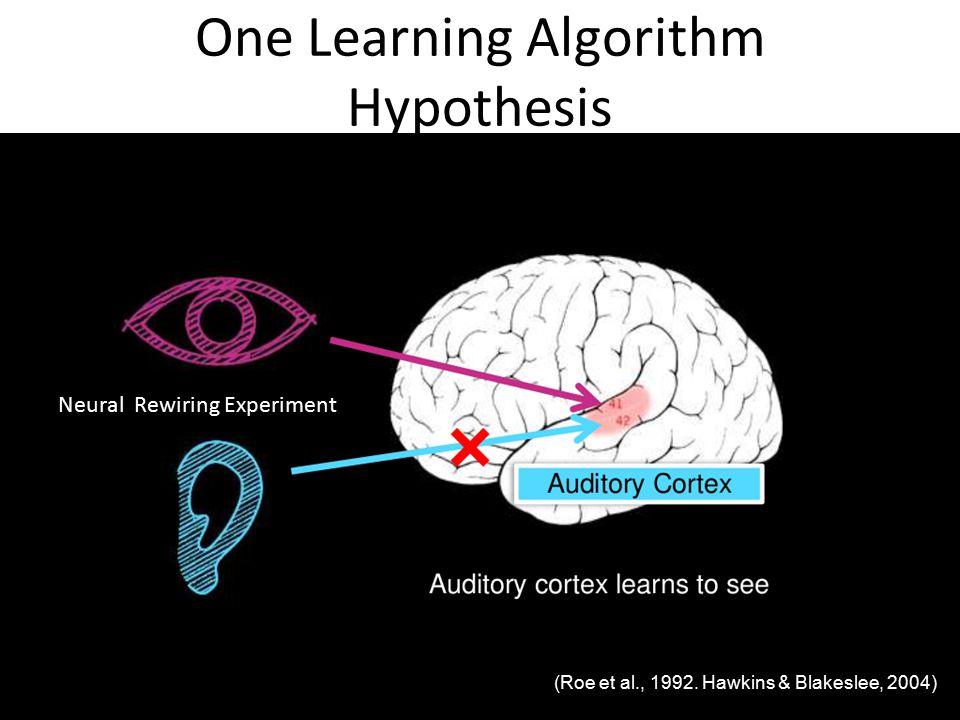 One Learning Algorithm Hypothesis Neural Rewiring Experiment (Roe et al., 1992.