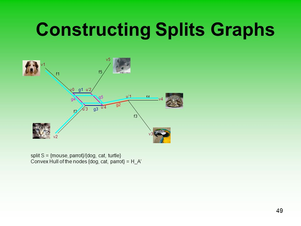 49 Constructing Splits Graphs f1 f2 f3 f5 f4 v0u'2 v1 v2 v4 v5 v3 g1 u'1 g2 u'3 u'4 g3 g4 g5 split S = {mouse, parrot}/{dog, cat, turtle} Convex Hull of the nodes {dog, cat, parrot} = H_A'