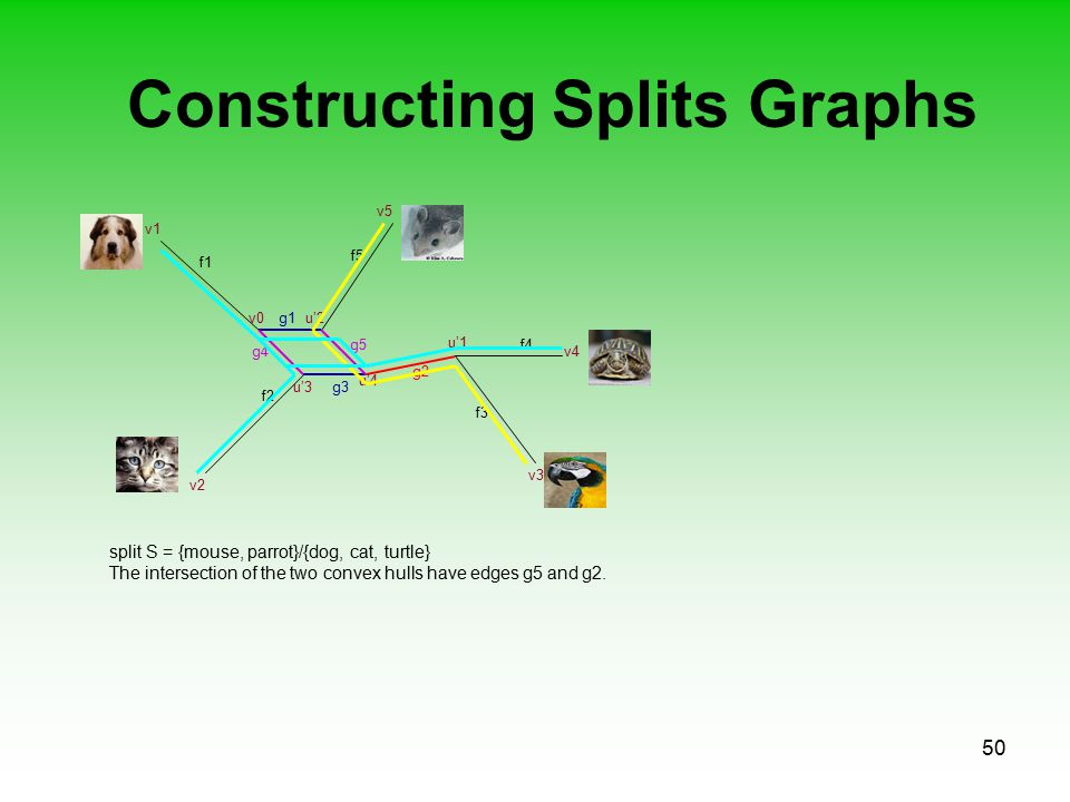 50 Constructing Splits Graphs f1 f2 f3 f5 f4 v0 split S = {mouse, parrot}/{dog, cat, turtle} The intersection of the two convex hulls have edges g5 and g2.