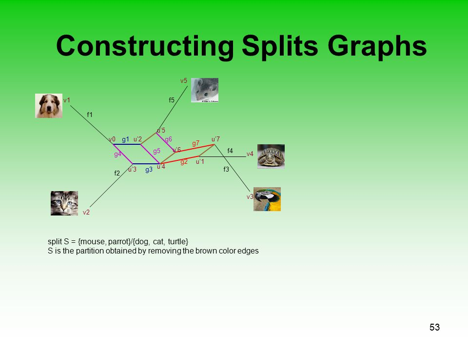 53 Constructing Splits Graphs f1 f2 f3 f5 f4 v0u'2 v1 v2 v4 v5 v3 g1 u'1g2 u'3 u'4 g3 g4 g5 split S = {mouse, parrot}/{dog, cat, turtle} S is the partition obtained by removing the brown color edges u'5 u'7g6 u'6 g7