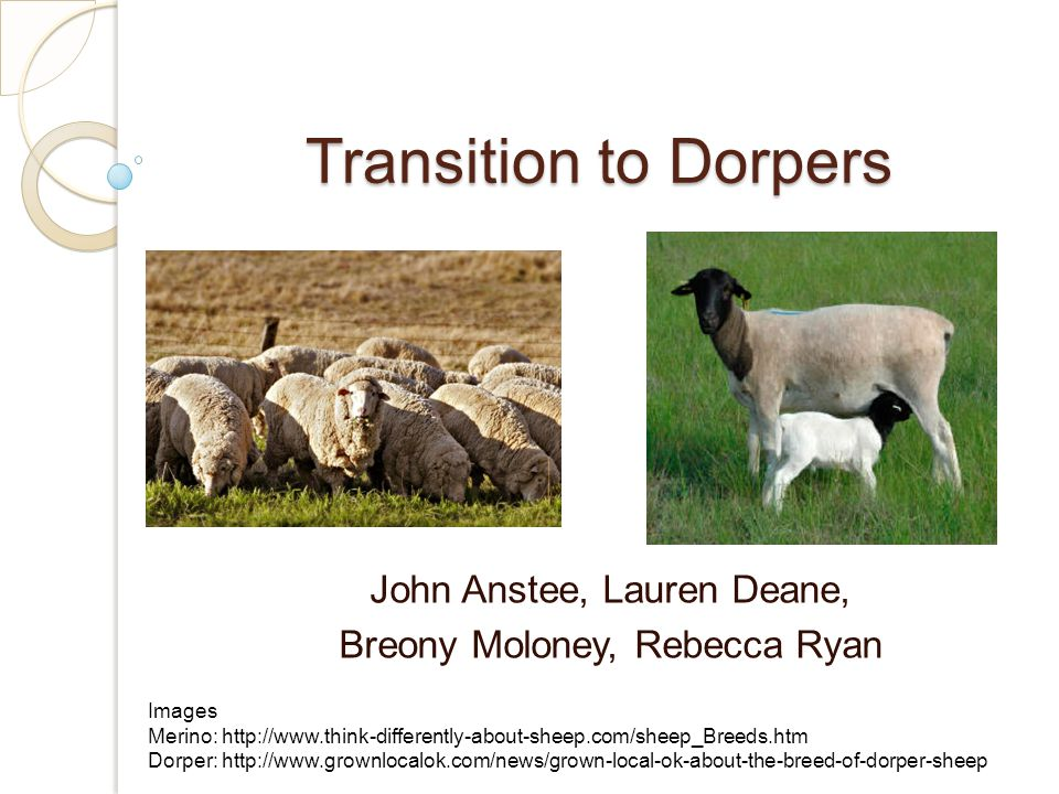 Transition to Dorpers John Anstee, Lauren Deane, Breony Moloney, Rebecca Ryan Images Merino: http://www.think-differently-about-sheep.com/sheep_Breeds.htm Dorper: http://www.grownlocalok.com/news/grown-local-ok-about-the-breed-of-dorper-sheep