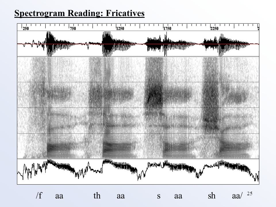 25 Spectrogram Reading: Fricatives /f aa th aa s aa sh aa/