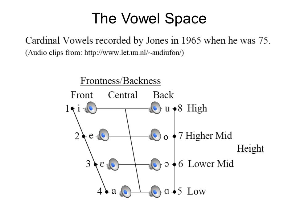 Vowel Dimensions For this reason, vowels have traditionally been described according to four (pseudo-)articulatory parameters: 1.Height (of tongue) 2.Front/Back (of tongue) 3.Rounding (of lips) 4.Tense/Lax = amount of effort.