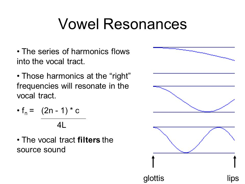 Vowel Resonances The series of harmonics flows into the vocal tract.