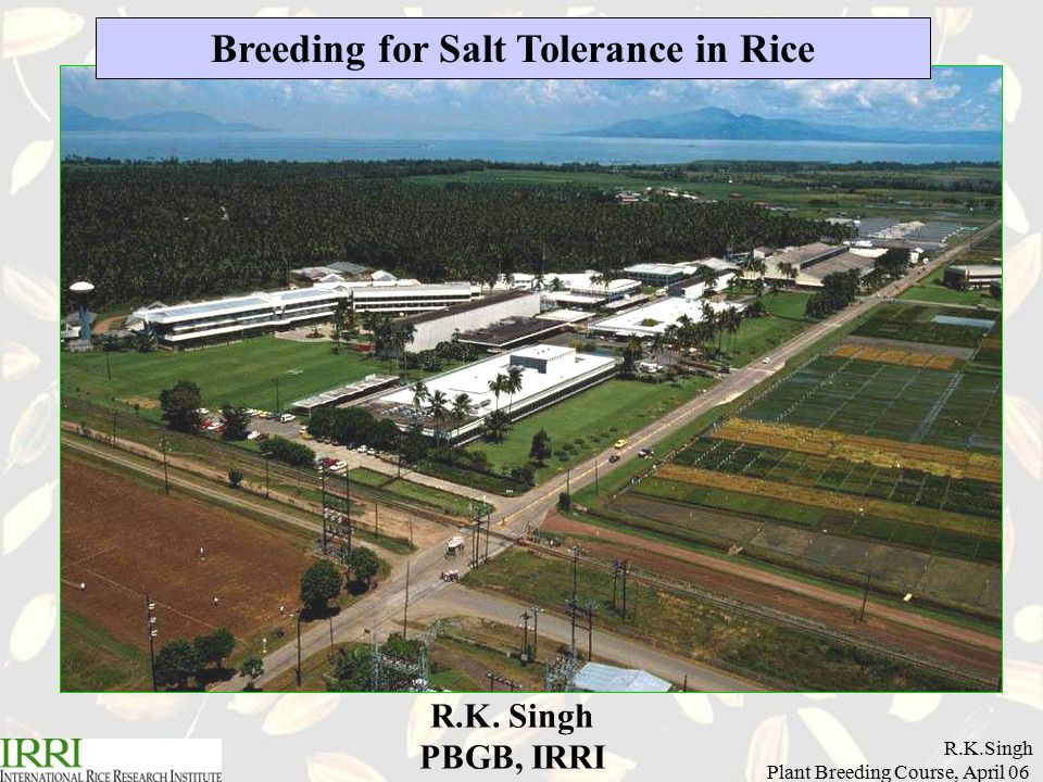R.K.Singh Plant Breeding Course, April 06 Breeding for Salt Tolerance in Rice R.K. Singh PBGB, IRRI