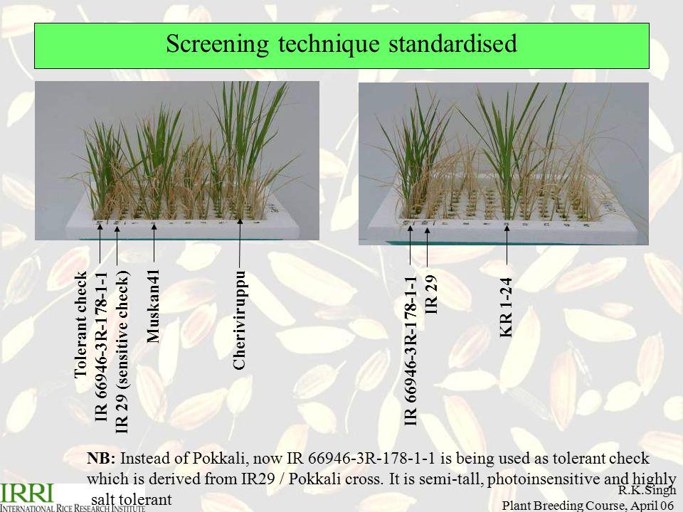 R.K.Singh Plant Breeding Course, April 06 Screening technique standardised KR 1-24 Tolerant check IR 66946-3R-178-1-1 IR 29 (sensitive check) Muskan41 Cheriviruppu IR 66946-3R-178-1-1 IR 29 NB: Instead of Pokkali, now IR 66946-3R-178-1-1 is being used as tolerant check which is derived from IR29 / Pokkali cross.