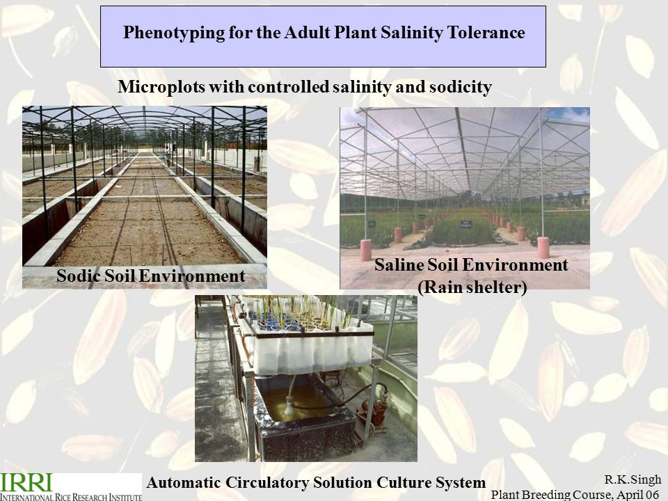 R.K.Singh Plant Breeding Course, April 06 Phenotyping for the Adult Plant Salinity Tolerance Microplots with controlled salinity and sodicity Sodic Soil Environment Saline Soil Environment (Rain shelter) Automatic Circulatory Solution Culture System