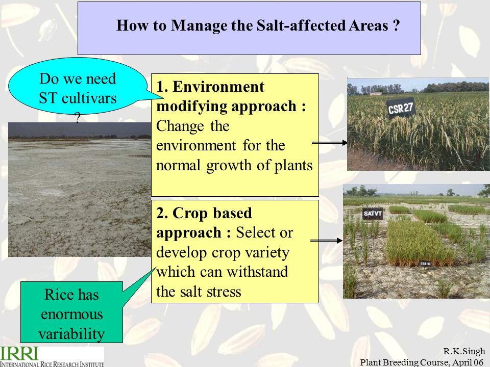 R.K.Singh Plant Breeding Course, April 06 Management of the Salt-affected Soils 3.