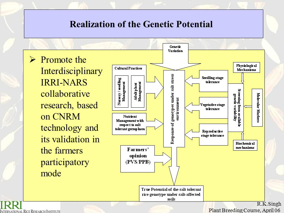 R.K.Singh Plant Breeding Course, April 06 Realization of the Genetic Potential  Promote the Interdisciplinary IRRI-NARS collaborative research, based on CNRM technology and its validation in the farmers participatory mode